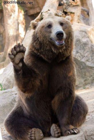 90 juegos de oso