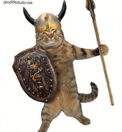 300 nombres de gatos guerreros