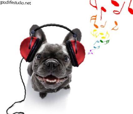 15 фантастических песен о собаках