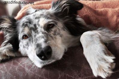 10 modliteb za nemocného psa