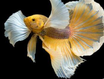 200 Nama Ikan Percuma