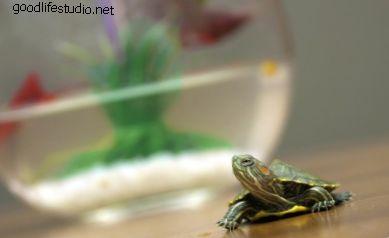 250 nombres para tortugas mascotas