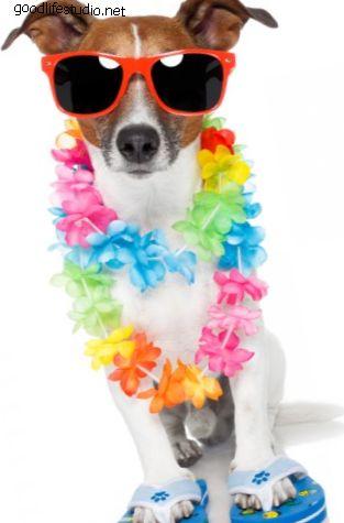 80 гавайских имен собак
