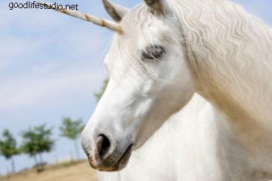 400 nombres de unicornios