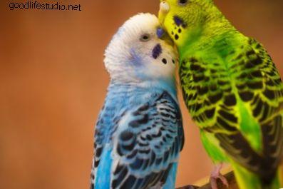 200 الأكثر شعبية أسماء الطيور متنوع 2021