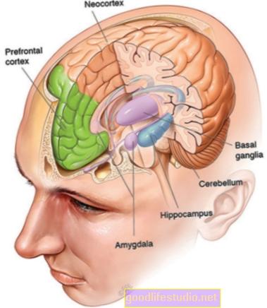 La amígdala puede contribuir a la vida social de los seres humanos