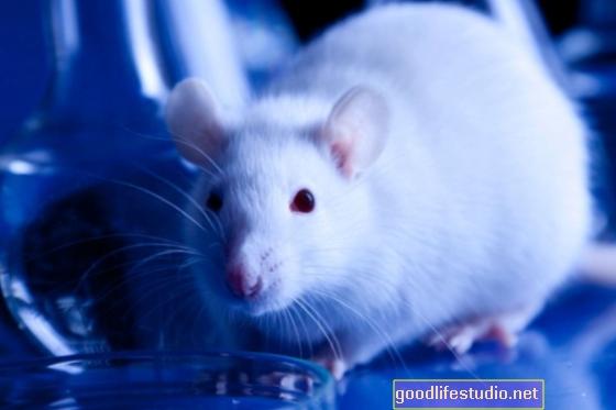 La ricerca sugli animali individua i problemi di memoria derivanti dalla perdita di sonno