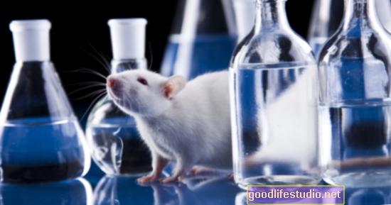 Pētījumi ar dzīvniekiem: Prebiotikas var palīdzēt uzlabot miegu