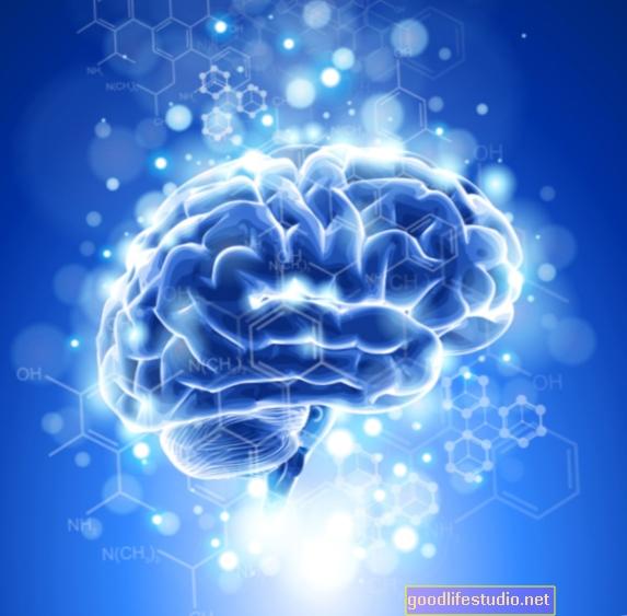 光応答に関係する脳の化学物質