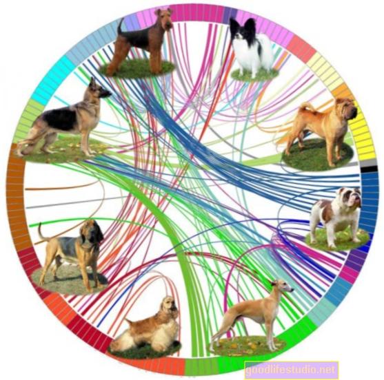 Šunų genomo tyrimai žada žmogaus OKS terapiją