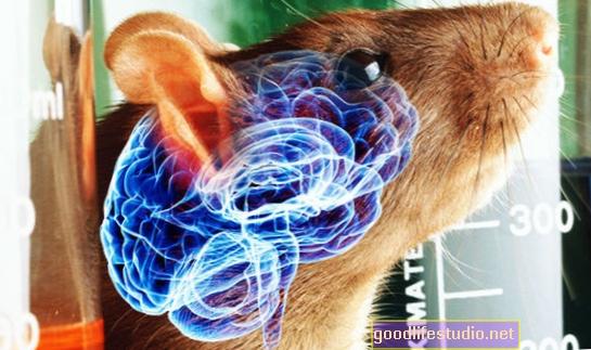 Cervello di ratto eccitabile collegato al comportamento rischioso degli adolescenti