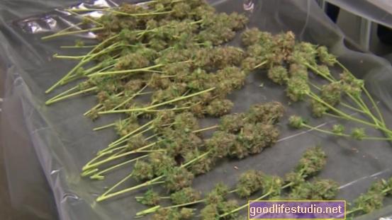 Un mayor consumo de marihuana relacionado con una esquizofrenia más grave