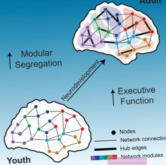 Cómo las redes cerebrales influyen en los trastornos alimentarios