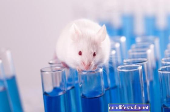 Vylepšená studie zvířecích modelů pomáhá při závažné depresi