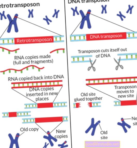Los 'genes saltarines' pueden desempeñar un papel en la esquizofrenia