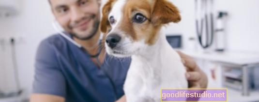 Muchos estudiantes veterinarios necesitan apoyo de salud mental para terminar la universidad