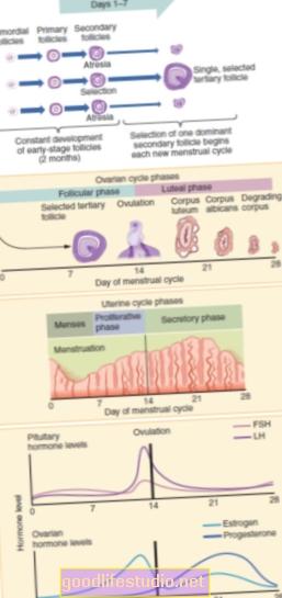 Menstruacijų fazė gali turėti įtakos streso pažeidžiamumui