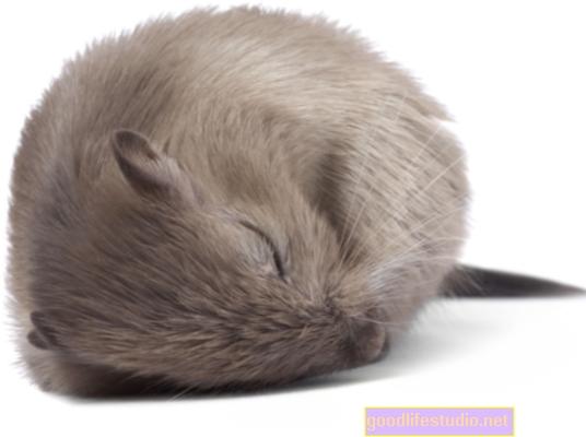 Un estudio con ratones muestra por qué es difícil romper los hábitos