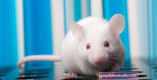 Studie na myších navrhuje expozici olova spojenou se schizofrenií