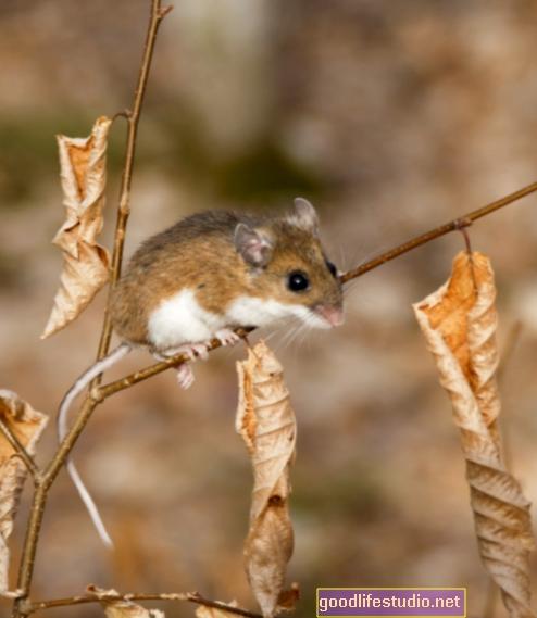Un estudio en ratones sugiere que algunos trastornos pueden estar relacionados con ciclos de 4 horas