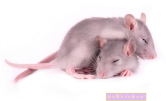 Modelo de ratón sugiere que los trastornos del sueño pueden estar relacionados con el Alzheimer