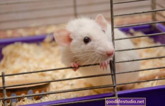 Peles pētījums: diēta var mazināt šizofrēnijas simptomus