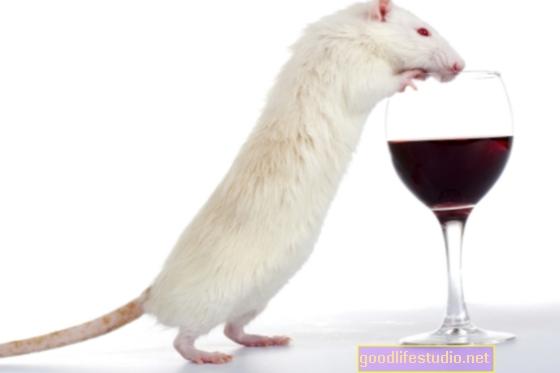 Дослідження мишей виявляє, що вживання алкоголю під час вагітності може вплинути на кілька поколінь