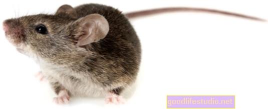 Un estudio sobre ratones encuentra que el estrés puede tener un impacto físico tan grave como la comida chatarra