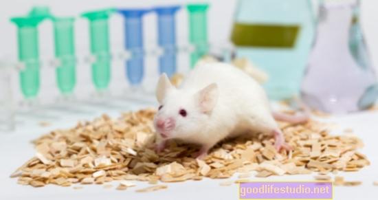 マウス研究IDタンパク質が概日リズムを促進