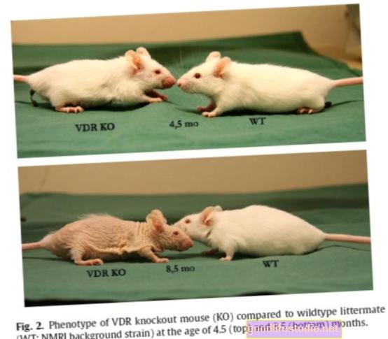 Изследване на мишки свързва витамин D с профилактиката на аутизма