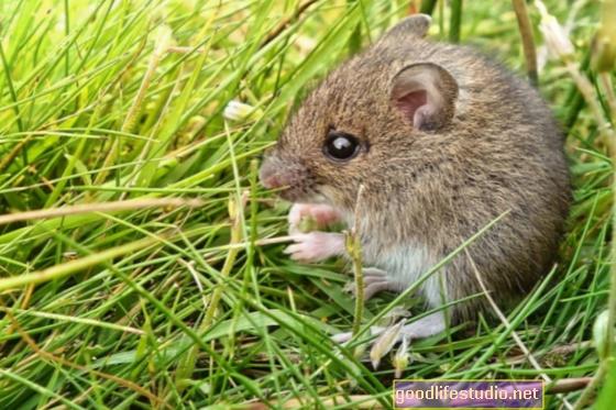 Проучването с мишка показва, че упражненията могат да помогнат на наркоманите да се възстановят