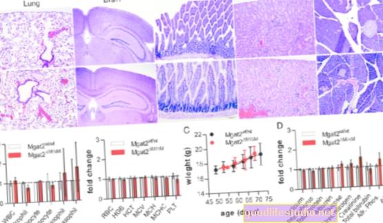 Uno studio sui topi mostra che la rabbia patologica può essere bloccata