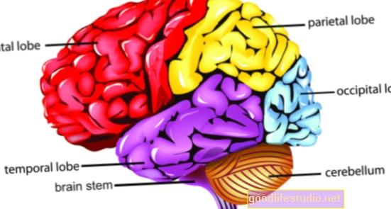 Части от мозъка офлайн, дори докато сме будни