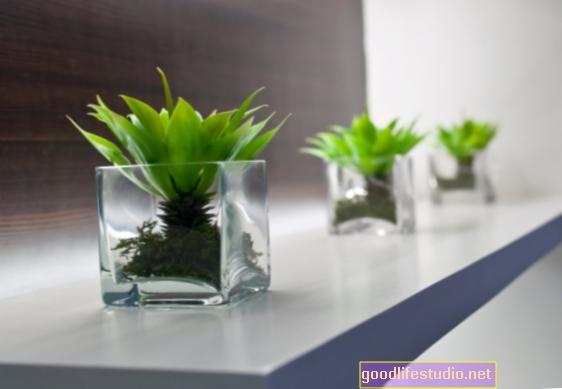 Rostliny zvyšují produktivitu na pracovišti