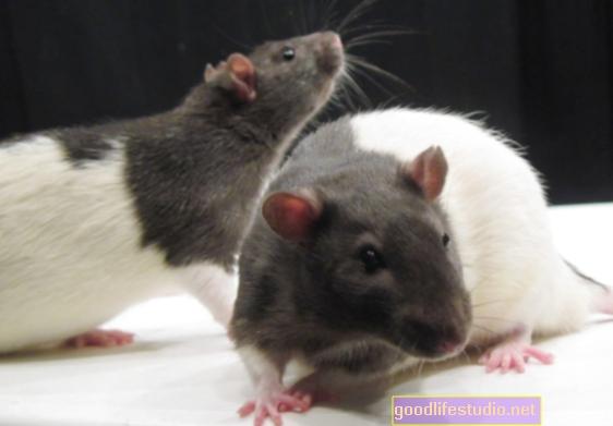 Un estudio en ratas encuentra que un fármaco para la ELA puede prevenir la pérdida de memoria relacionada con la edad