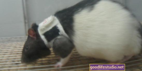 Estudio de ratas muestra un vínculo entre el hambre y el estado de ánimo