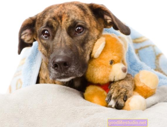 El estrés por una mascota enferma puede provocar problemas de salud mental