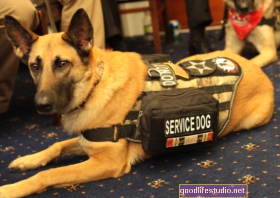 Những chú chó phục vụ của cựu chiến binh thường dễ gây lo lắng nhất