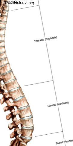 脊柱後Anaの解剖学