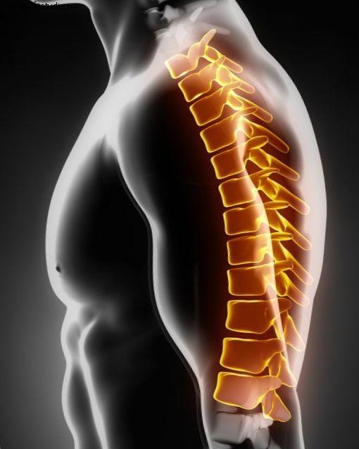 Анатомия верхней части спины