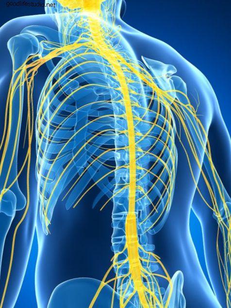 Kecederaan pada tulang belakang tulang belakang: regenerasi saraf dan sel stem