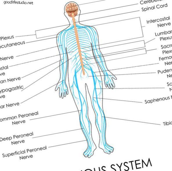 Anatomía del dolor crónico