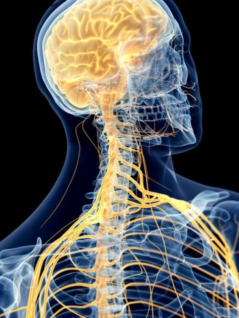 Терапия стволовыми клетками AST-OPC1 может дать новую надежду на повреждение спинного мозга