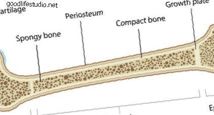 Anatomie osteoporózy
