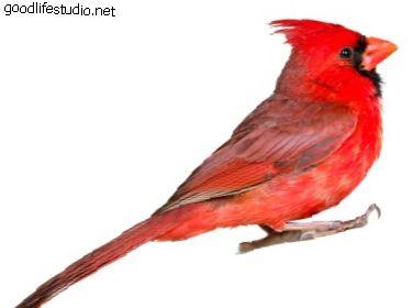 Ред БКА АКА кардинал: симболика и значење