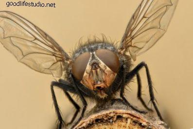La mosca: espíritu animal, simbolismo y significado