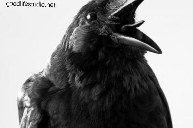 Ворон, Ворон: Духовное Животное, Символизм и Значение