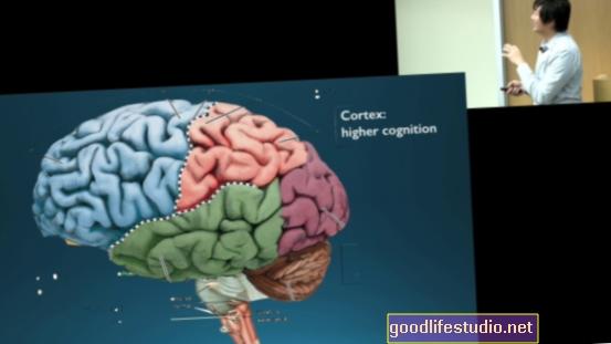 Увод у неурознаност која стоји иза стварања ваше стварности