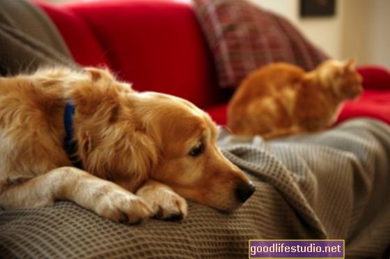 ¿Son los animales de apoyo emocional tratamientos efectivos para la ansiedad?