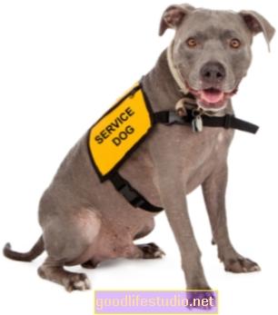 Podcast: Animales de servicio frente a animales de apoyo emocional